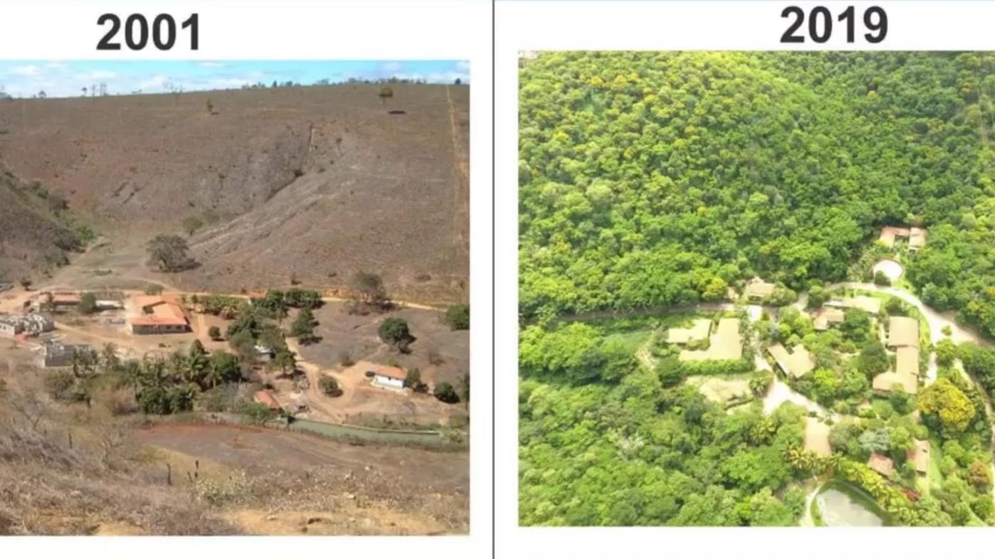 Brasilien Ehepaar Forstet Regenwald Wieder Auf
