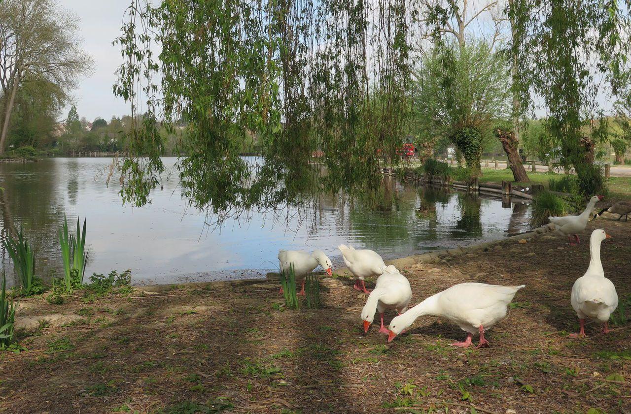 Les Six Plus Beaux Lacs Où Faire Une Balade En Essonne Le