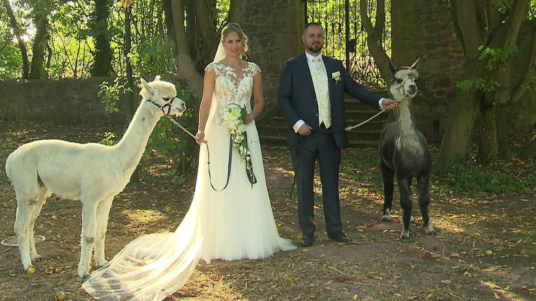 Wedding Rosalie Tim In 2020 Alpakas Alpaka Inspiration