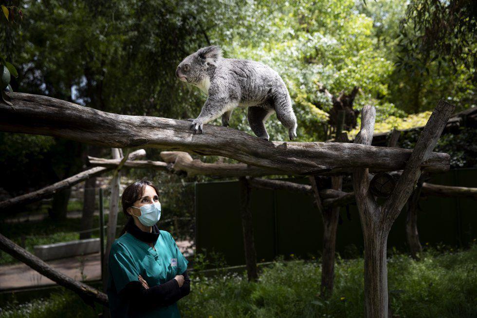 Primavera Confinada En El Zoo Sin Público Madrid El País