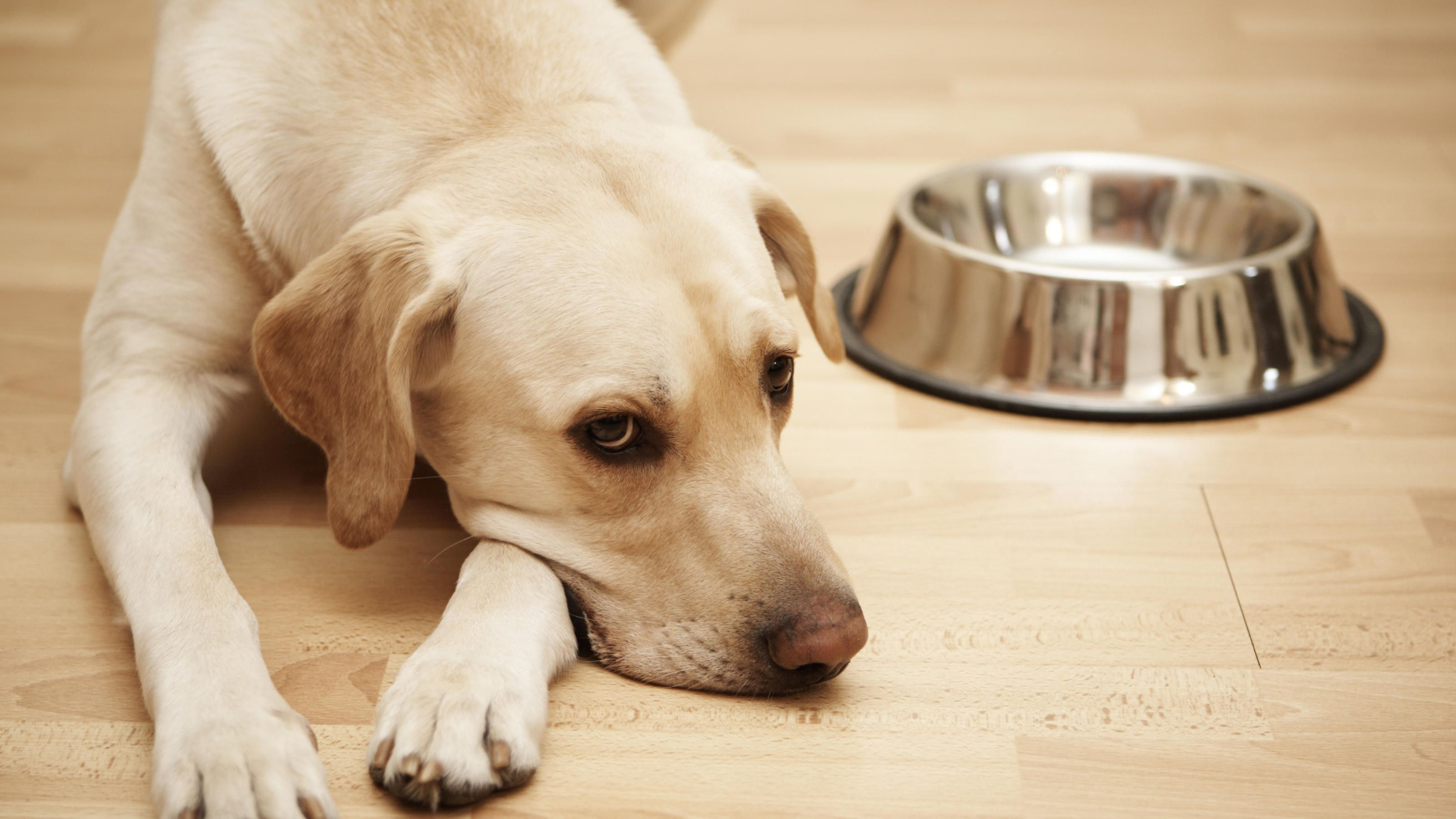 hundefutter test stiftung warentest