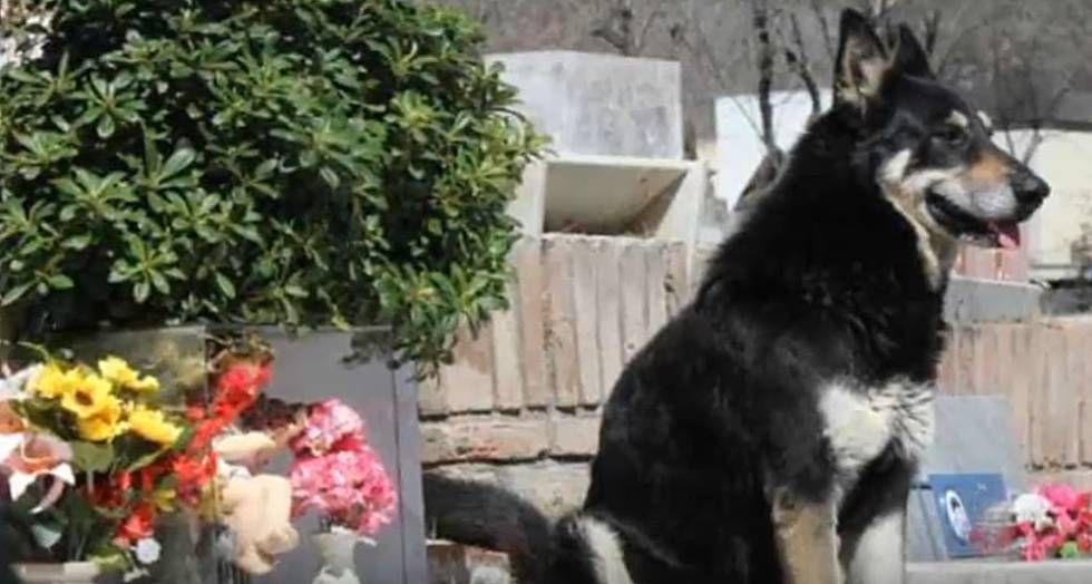 A Brutal Morte De Um Cachorro Vira Lata Em Um Carrefour Leva