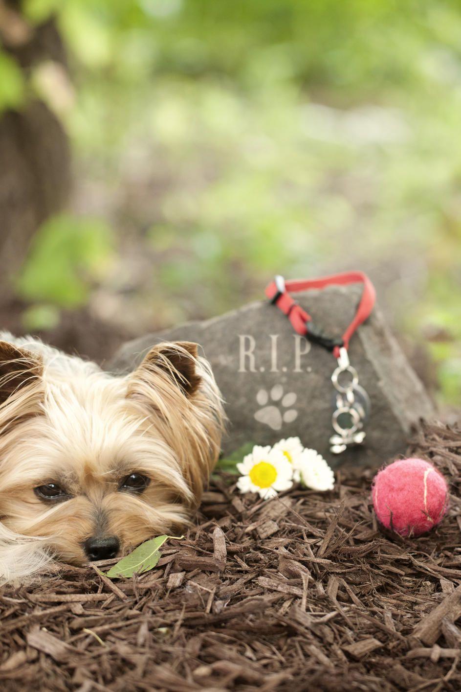 Tierbestattungen So Beerdigen Sie Ihr Haustier Richtig